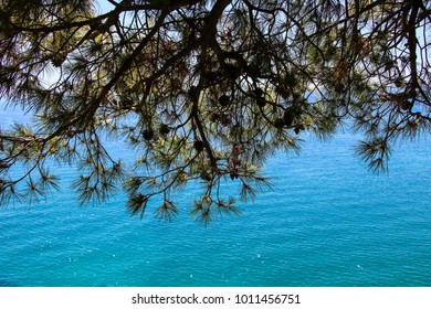View of the mediterranean sea through a branch of pine and cones