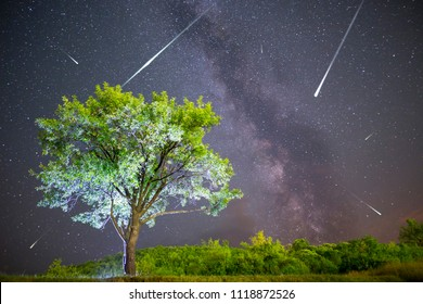 A view of a Meteor Shower and the Milky Way. Green plum tree with plums high in the mountain in the foreground. Night sky nature summer landscape. Perseid Meteor Shower observation.