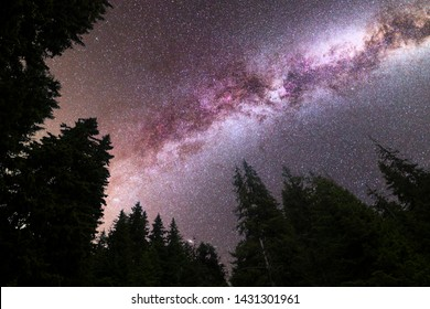 A view of a Meteor Shower and the purple Milky Way with pine trees forest silhouette in the foreground. Perseid Meteor Shower observation. Night sky nature summer landscape.