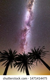 A view of a Meteor Shower and the purple Milky Way with three palm trees silhouette in the foreground. Night sky nature summer landscape. Perseid Meteor Shower observation. Vertical.