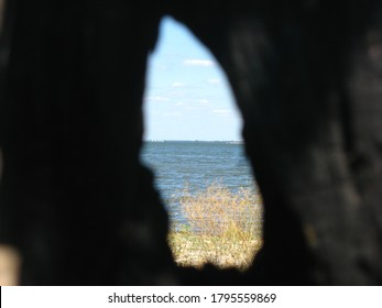 View of the milk estuary through a crevice in the tree