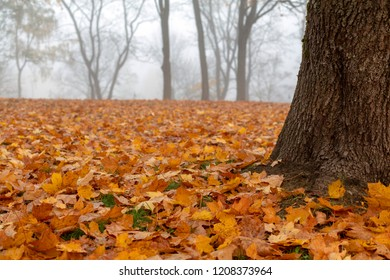 View of misty autumn park  with fallen leaves