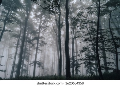 View of a misty humid forest with high green grass and ferns. Detail shot of fern in the middle of a forest. Mist and rain in the forest.