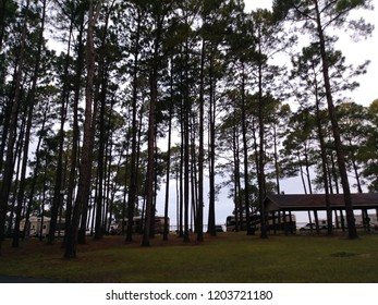 View of Mobile Bay through the Pine Trees