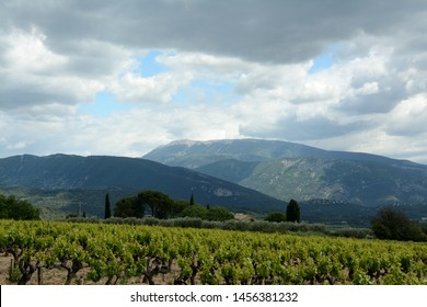 View of the Mont Ventoux, Ventoux mountain. In the foreground mountains, fields, vines, vineyard, cypres, umbrella pines, a house. A cloudy sky. Spring in France, Provence.