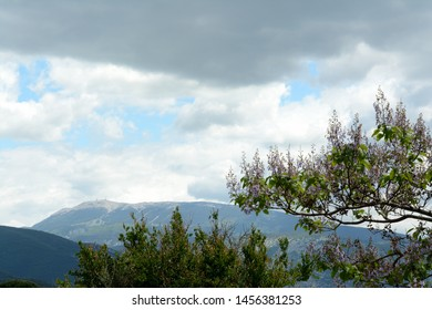 View of the Mont Ventoux, Ventoux mountain. In the foreground  blossoming trees. A cloudy sky. Spring in France, Provence.