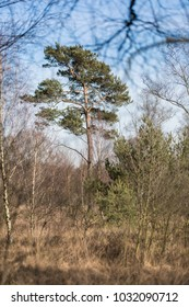View in a moor shows a Pine
