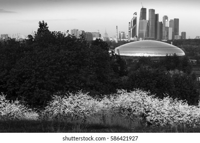 View of Moscow with flowering cherry trees on the foreground. Russia, Moscow, May 2016.