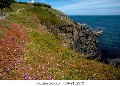 View of the most southerly point in Britain - the dramatic coastline, covered in spring flowers, at Lizard Point in Cornwall, England.
