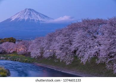 View of Mount Fuji with Sakura cherry blossom at Ryuganbuchi, Shizuoka, Japan
