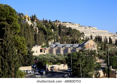 A view of the Mount of Olives in Jerusalem showing the onion head shaped golden domes of Maria Magdalena Russian Orthodox church in the background and the Church of All Nations in the foreground.