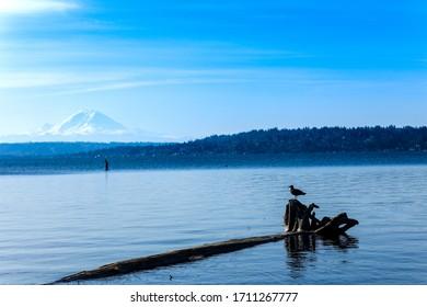 View of Mount Rainier over lake Washington from Seward Park Seattle, Washington.