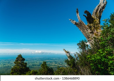View from Mount Taranaki trek tramping trail. Green landscape, blue sky, tree. Perspective view from the Pouakai Hut.  Shot in North Island, New Zealand