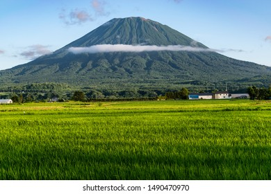 View of Mount Yotei with green rice field in the foreground, Niseko, Japan