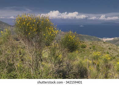 View from the mountain Cima del Monte near Rio nell Elba, Elba, Tuscany, Italy, Europe
