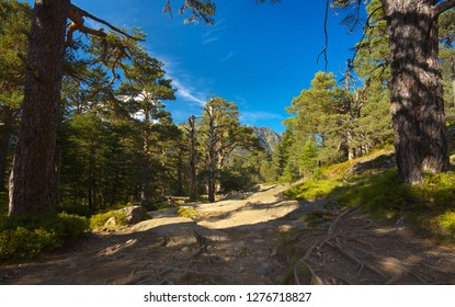 View of a mountain forest way framed by two trunks, Pyrenees Occidentales, France