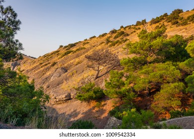 View of mountain ravine with  sparse forest lit with low sun light under clean blue sky at sunrise in Crimea