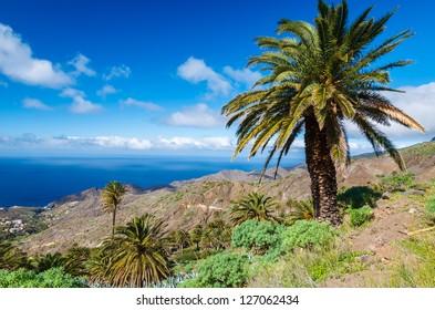 View mountain valley palm tree clouds blue sky, Alojera,La Gomera, Canary Islands