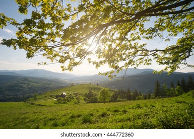 View at the mountain village, pasture and wooden house through fresh green leaves of the maple tree and rays of the sun. Carpathian mountains, Ukraine.
