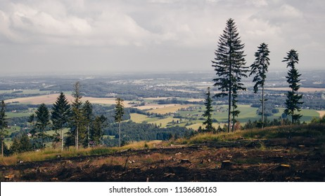 A view from the mountains to the lowland, in the foreground of the clearing and lonely firs.Czech Trepublica, Beskydy Mountains.
