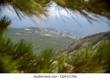 View of mountains through pine branches