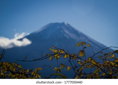 View of Mt.Fuji with the leaves foreground.