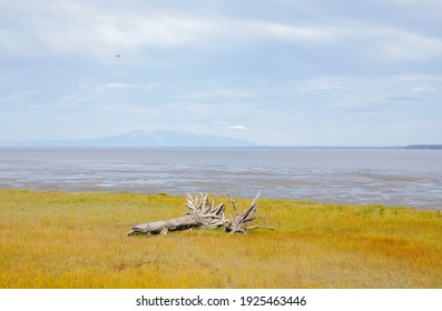 A view of the mud flats and coast along the Tony Knowles coastal trail against a background of a cloudy sky over Mount Susitna in the background; as seen in the summer of 2019 in Anchorage, Alaska.