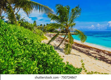 View of the natural beach, coconut trees, blue sky and Caribbean Sea at Elbow Cay, Abaco, The Bahamas.
