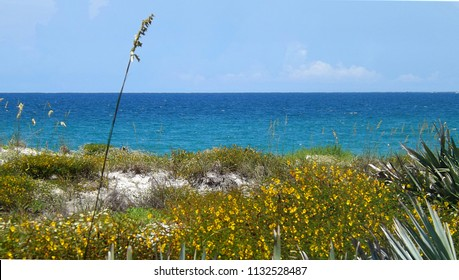 The view from the nature hike boardwalk in the town of Ponce Inlet, Florida.  The view shows the Atlantic Ocean, the beach sand dunes, sea oats, saw palmetto, and partridge pea yellow wild flowers.