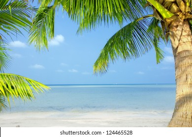 view of nice green  tropical palms on blue sky back