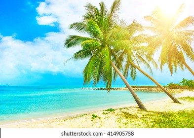 View of nice tropical beach with palms around. Holiday and Vacation