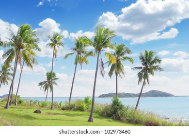 View of nice tropical  shore  with some palms around