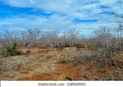 View of North Seymour Island, arid desert terrain.