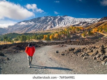View of northern side of Mount Etna, Sicily, with a pine and beech wood and a hiker on a lavic path - Shutterstock ID 769564981