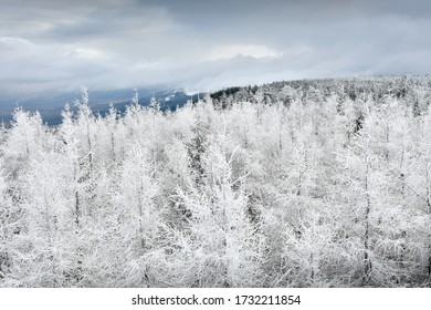 View from the observation tower on the snowy trees in the mountains. Lookout point on the hiking trail.