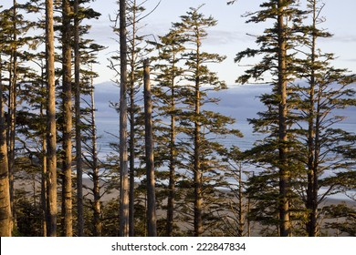 View of ocean through the forest at sunrise. Pacific Rim National Park, Vancouver Island, British Columbia, Canada