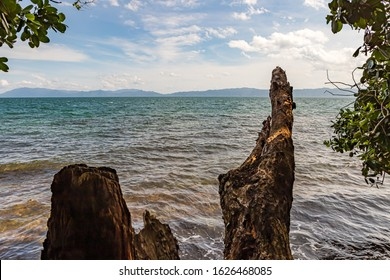 View of the ocean through several different snags, turned by water on the shore of a gulf overgrown with palm trees