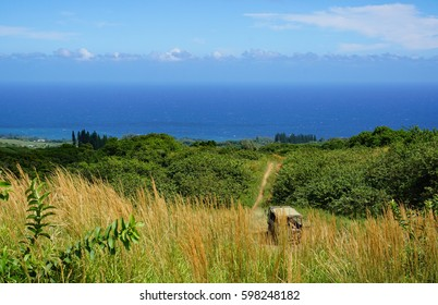 View of a off road trail to the ocean in Hawaii
