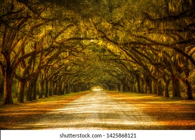 View of old oak trees with spanish moss forming an alley in Savannah, Georgia