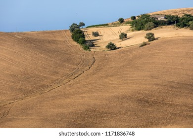 view of olive groves and farms on rolling hills of Abruzzo. Italy