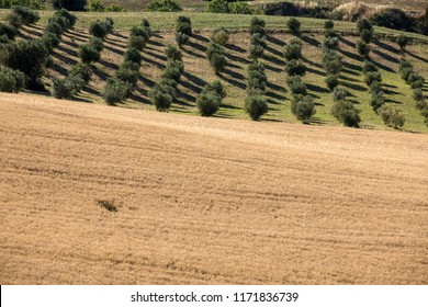 view of olive groves and fields on rolling hills of Abruzzo