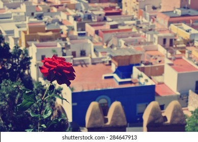 View on the Andalusian city of Almeria from the top of Alcazaba fortress, with red rose in focus, on a sunny summer day. Image filtered in faded, washed out, retro, vintage style.