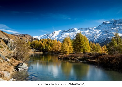 View on autumn forest with pine trees, snowy mountains, lake Grindjisee and blue sky with white clouds, Switzerland.