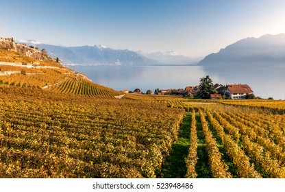 View on the autumnal vineyard terraces, lake Leman and Alps Mountains in the sunny day. Region Lavaux, Switzerland