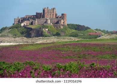 View on the Bamburgh Castle from the northeast with pink flowers on the foreground