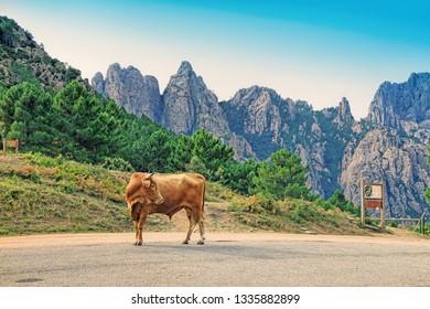 View on bavella mountains (Aiguilles de Bavella ) range in Corsica island, France