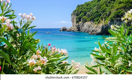 View on the bay and beach Paleokastritsa with flowers and blue sea water on the Island Corfu, Greece.