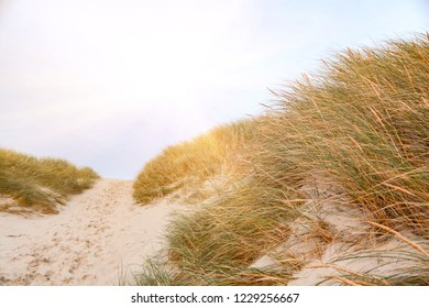 View on the beautiful landscape with beach and sand dunes at the North Sea, Jutland Denmark