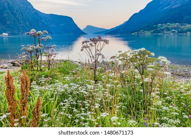 View on beautiful Sognefjord during blue hour with flowers in the front from Skjolden Sogn og Fjordane county in Western Norway
