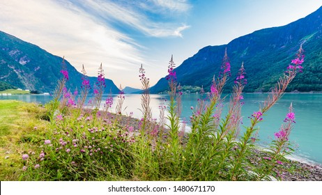 View on beautiful Sognefjord with flowers in the front during blue hour from Skjolden Sogn og Fjordane county in Western Norway